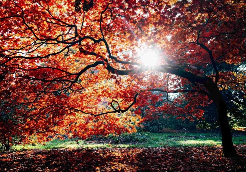 Autumn Funeral